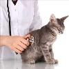 Ветеринарные клиники в Уржуме